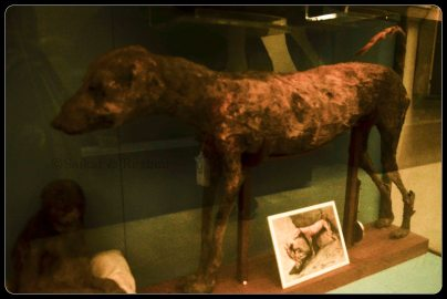 Mummy of Dog