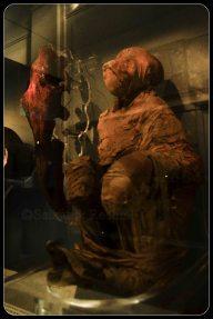 Mummy of Baboon