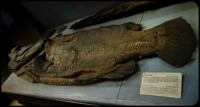 Mummy of Fish